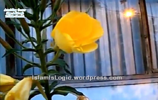 bunga mekar dengar adzan