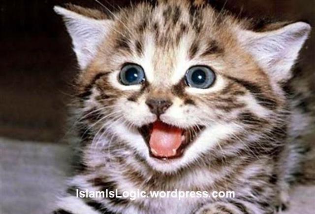 Keistimewaan Mueeza Kucing Kesayangan Rasulullah S A W Guide Us To The Straight Path Qs 1 6